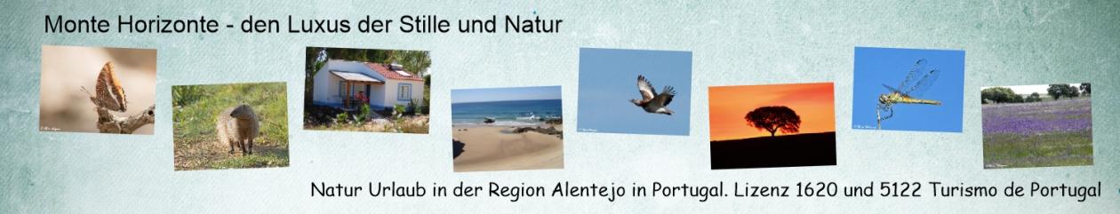 Monte Horizonte Natur Urlaub Portugal