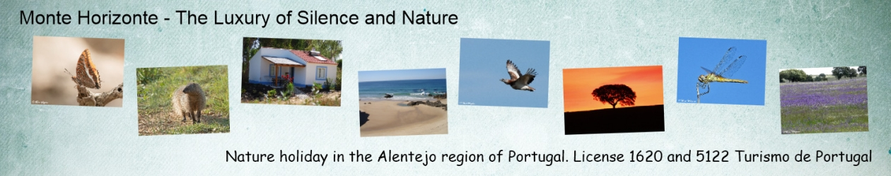 Monte Horizonte Nature Holiday
